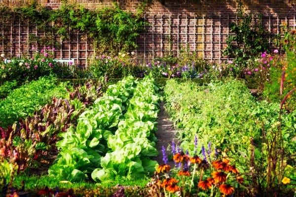 Calendrier Plantations Potager.Calendrier Les Quatre Saisons Du Potager
