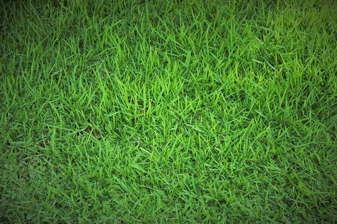Vælg den rette græssammensætning