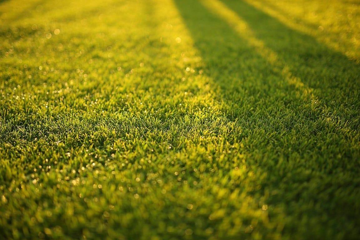 Flot, grøn græsplæne