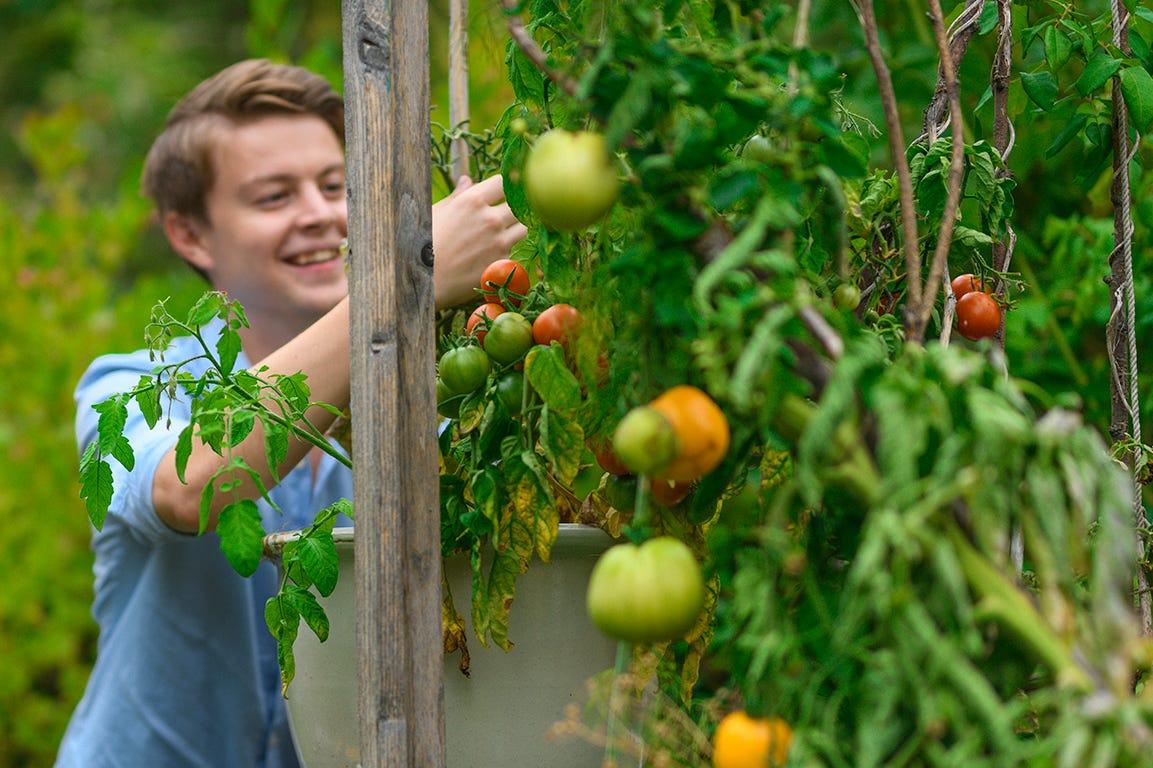 Så frø til tomater i marts