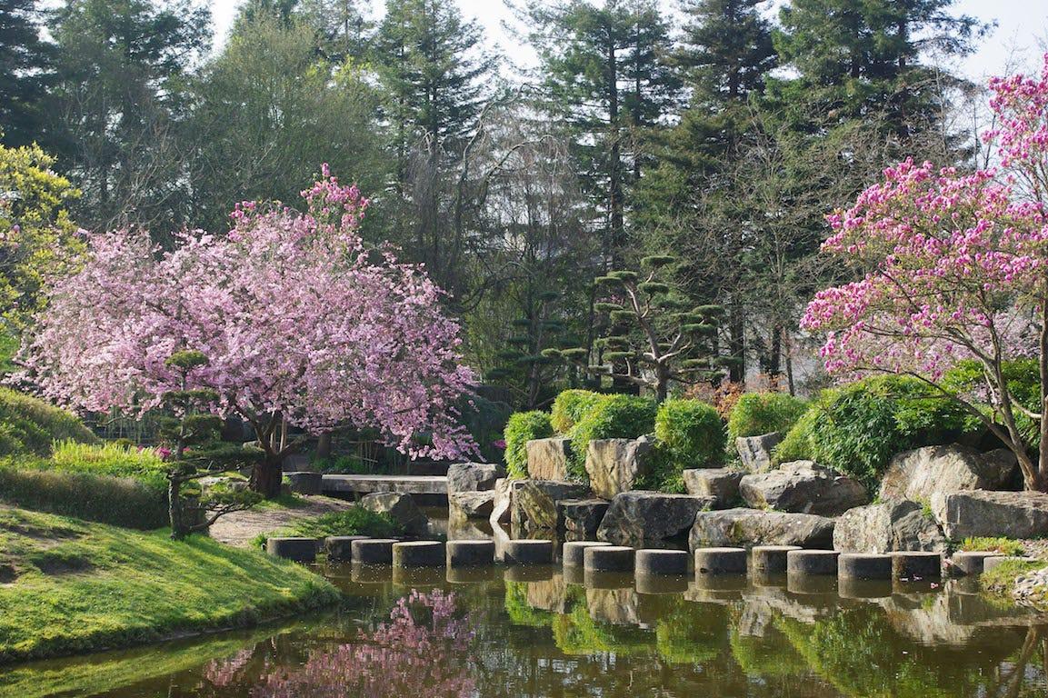 Jardin japonais ville de Nantes, Ile De Versaille, cerisier