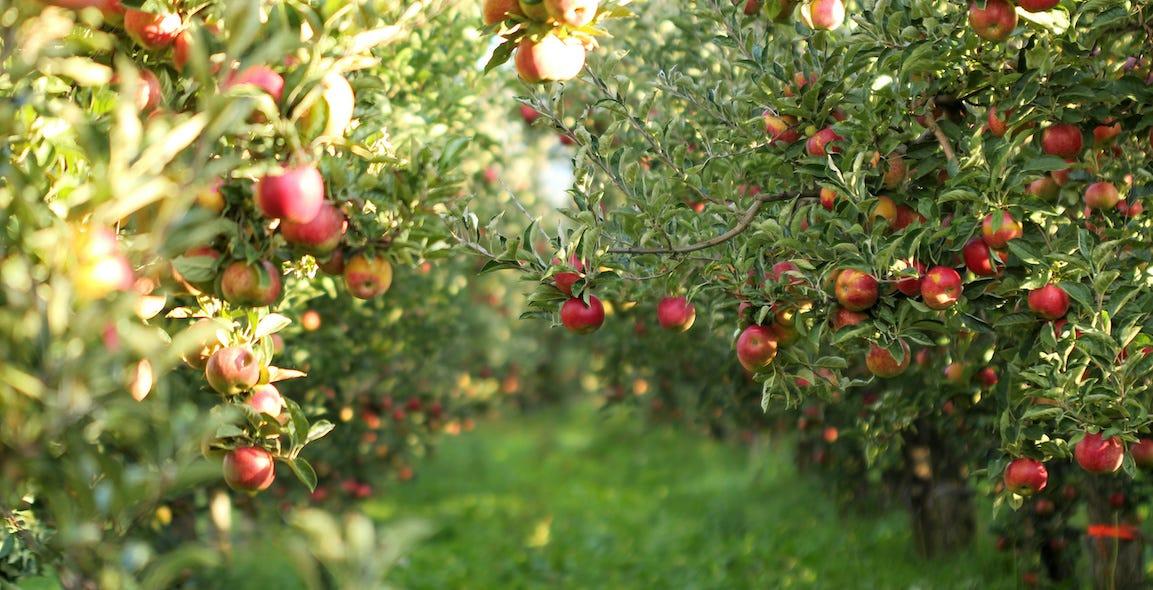arbres fruitiers en automne