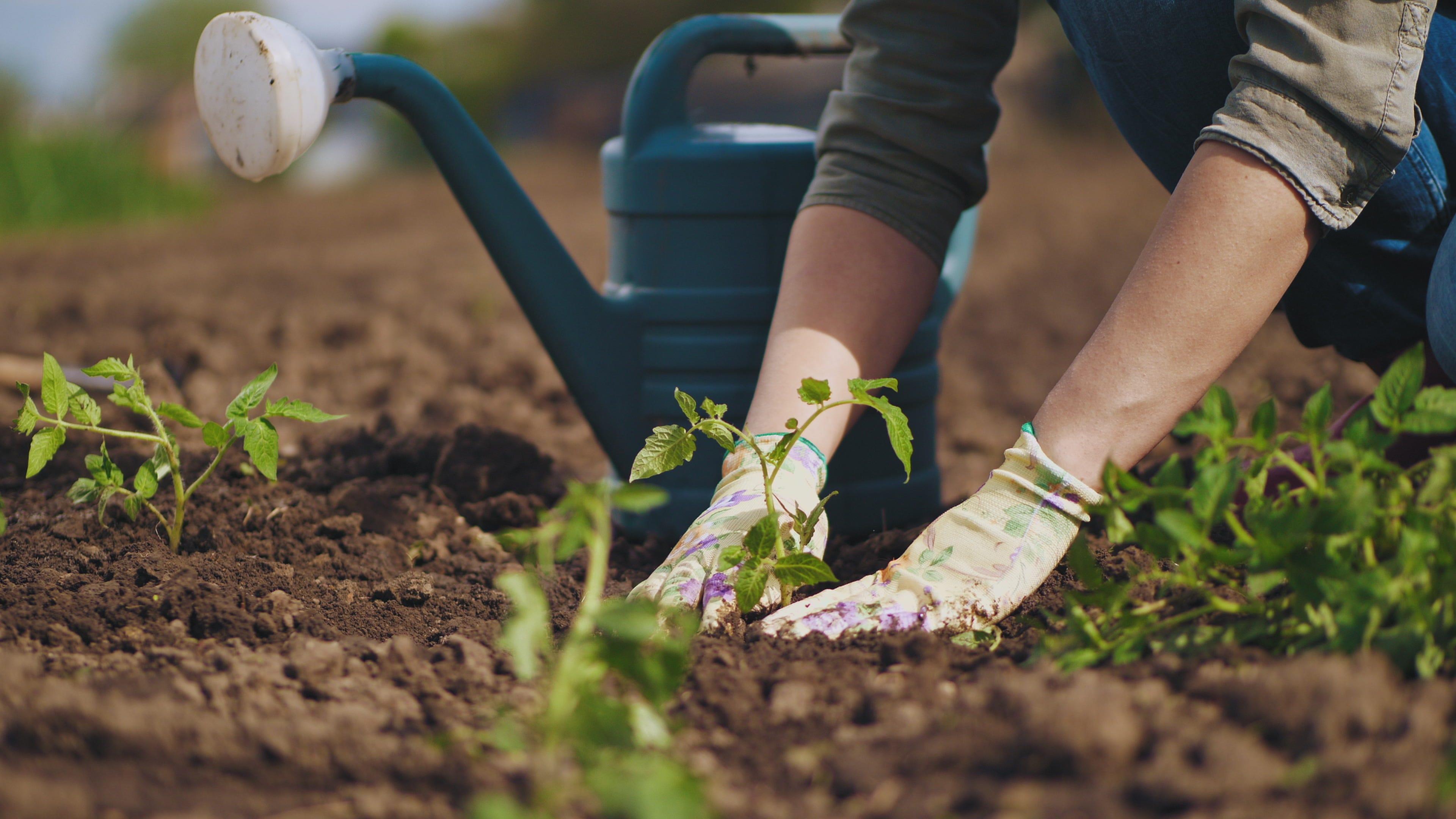 personne qui jardine