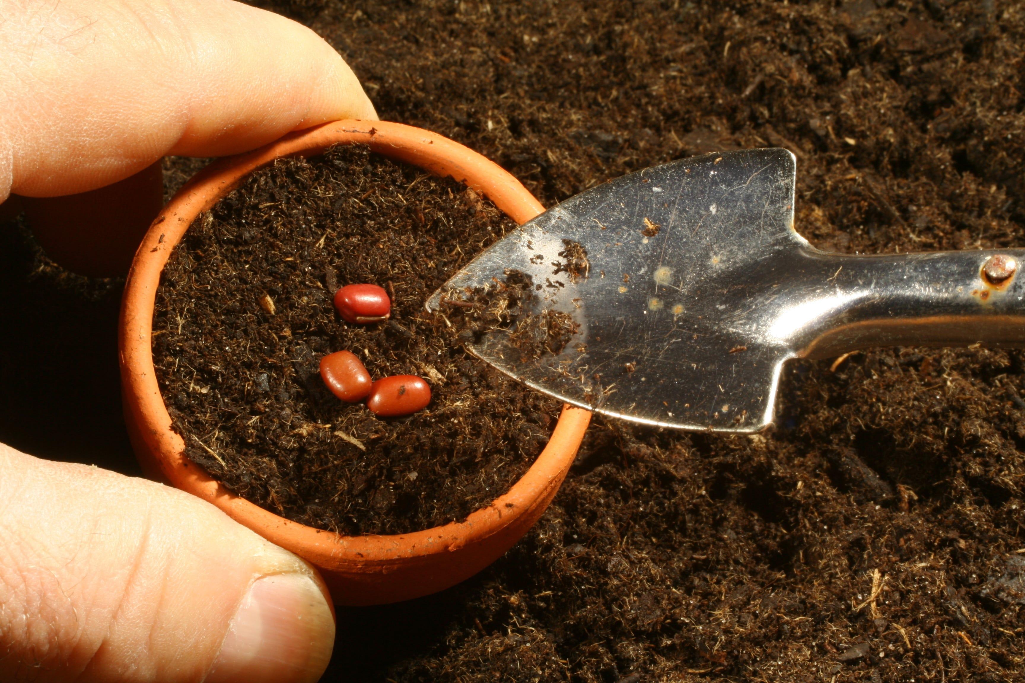 multiplication-srtiga-jardinage