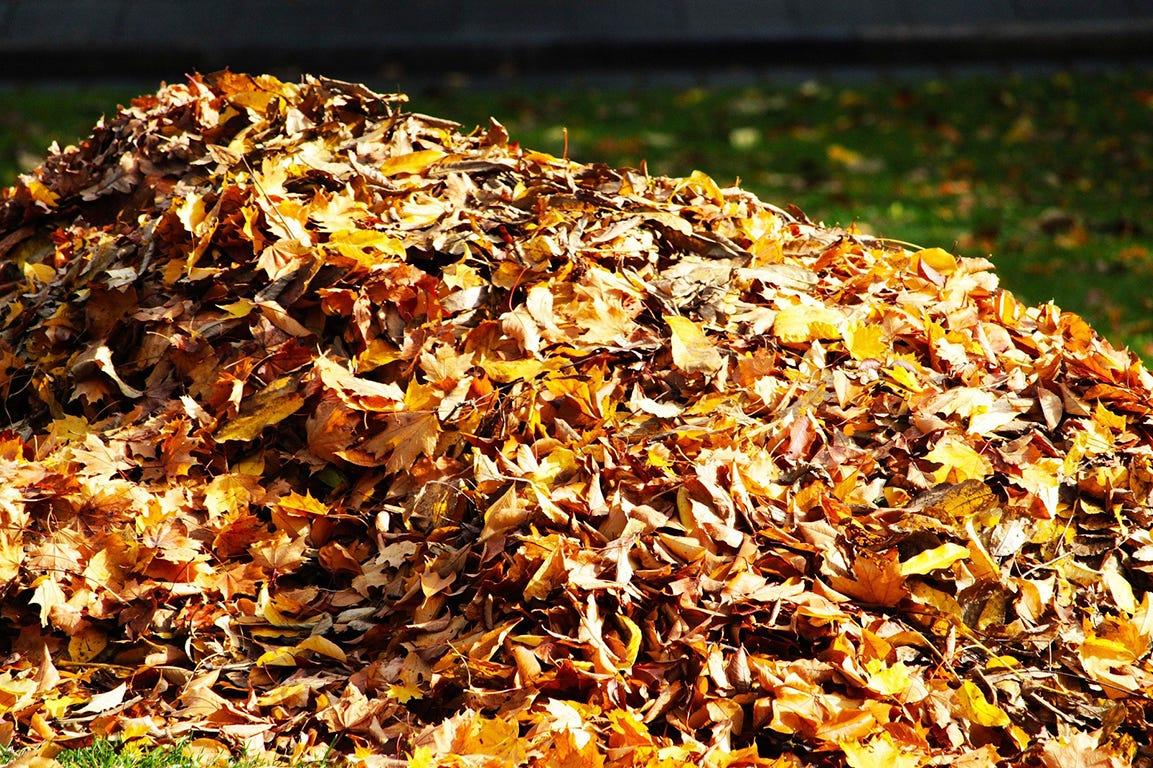 Brug de visne blade i haven