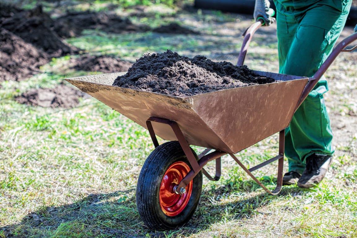 Après la sécheresse, comment restaurer la pelouse ?