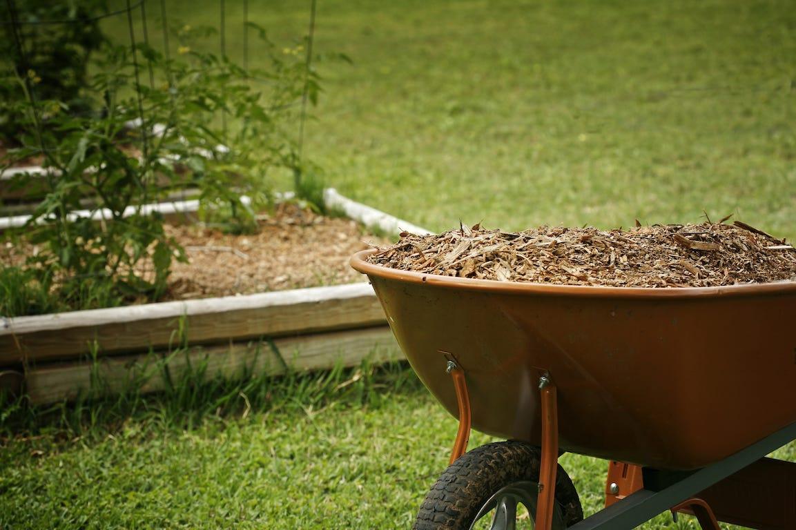 brouette remplie de paillage pour mulching dans jardin et potager