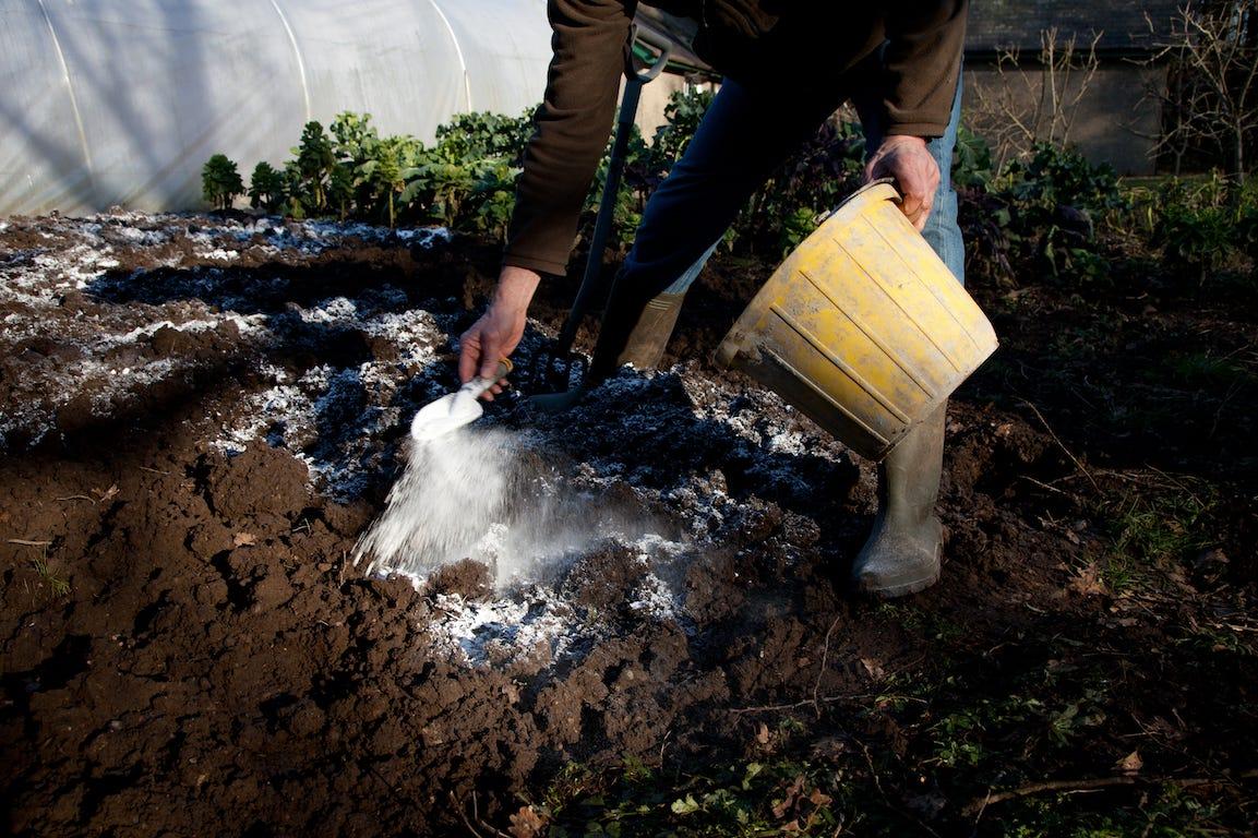 poudre de chaux vive dans la terre pour réguler le pH