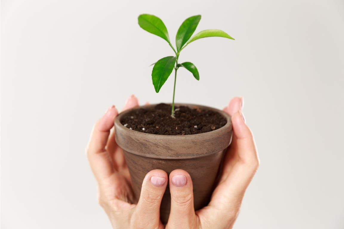Woman hands holding pot with small green plant