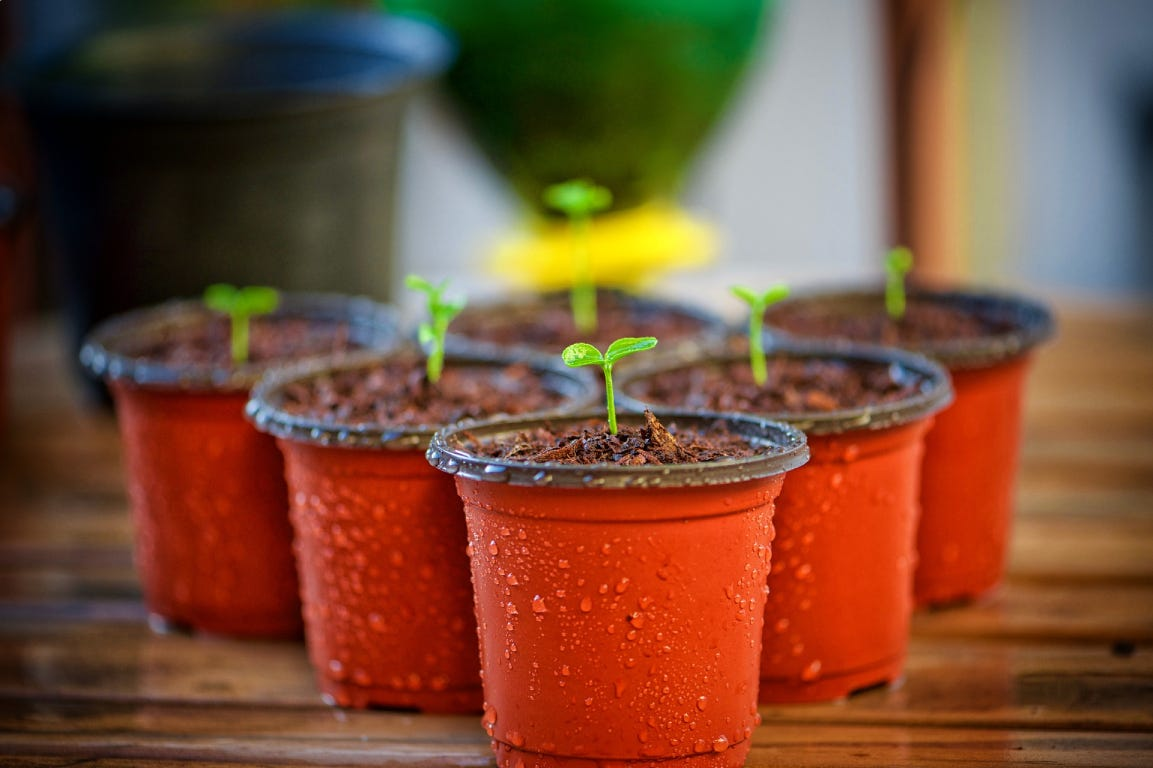 Small plants growing in red pots