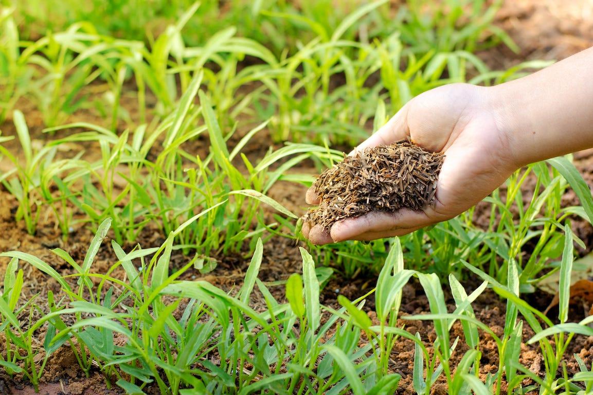 poignet d'engrais organique dans une main pour potager ou jardin
