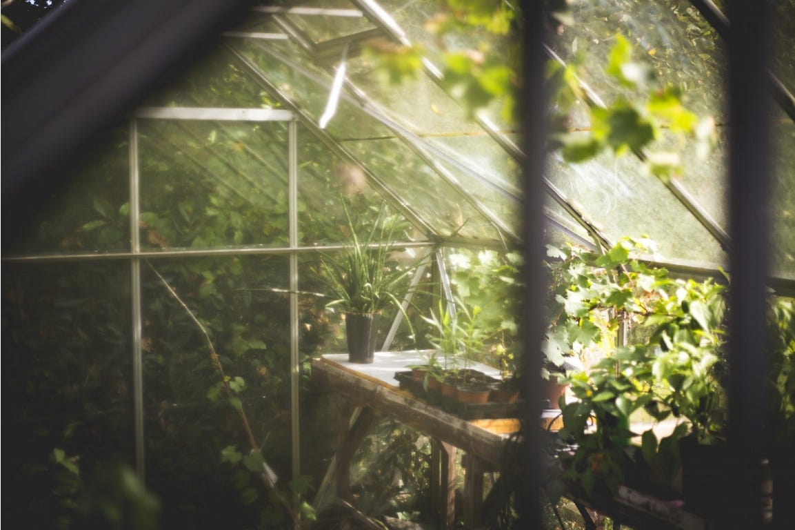 Glass greenhouse with green plants and sunlight.