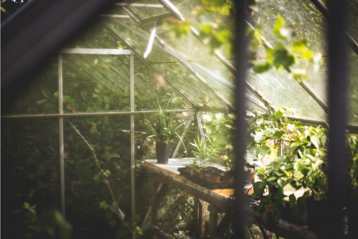 Tuinkas serre met groene planten en zonlicht