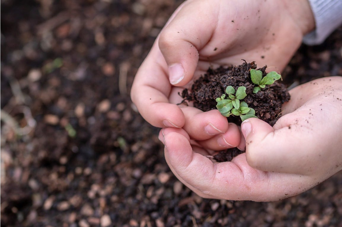 Hands holding earth and small green leaves.