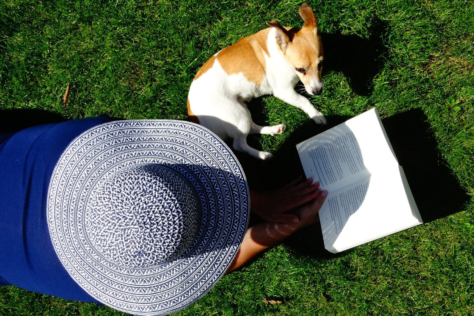 Woman with book and small dog lying in the grass