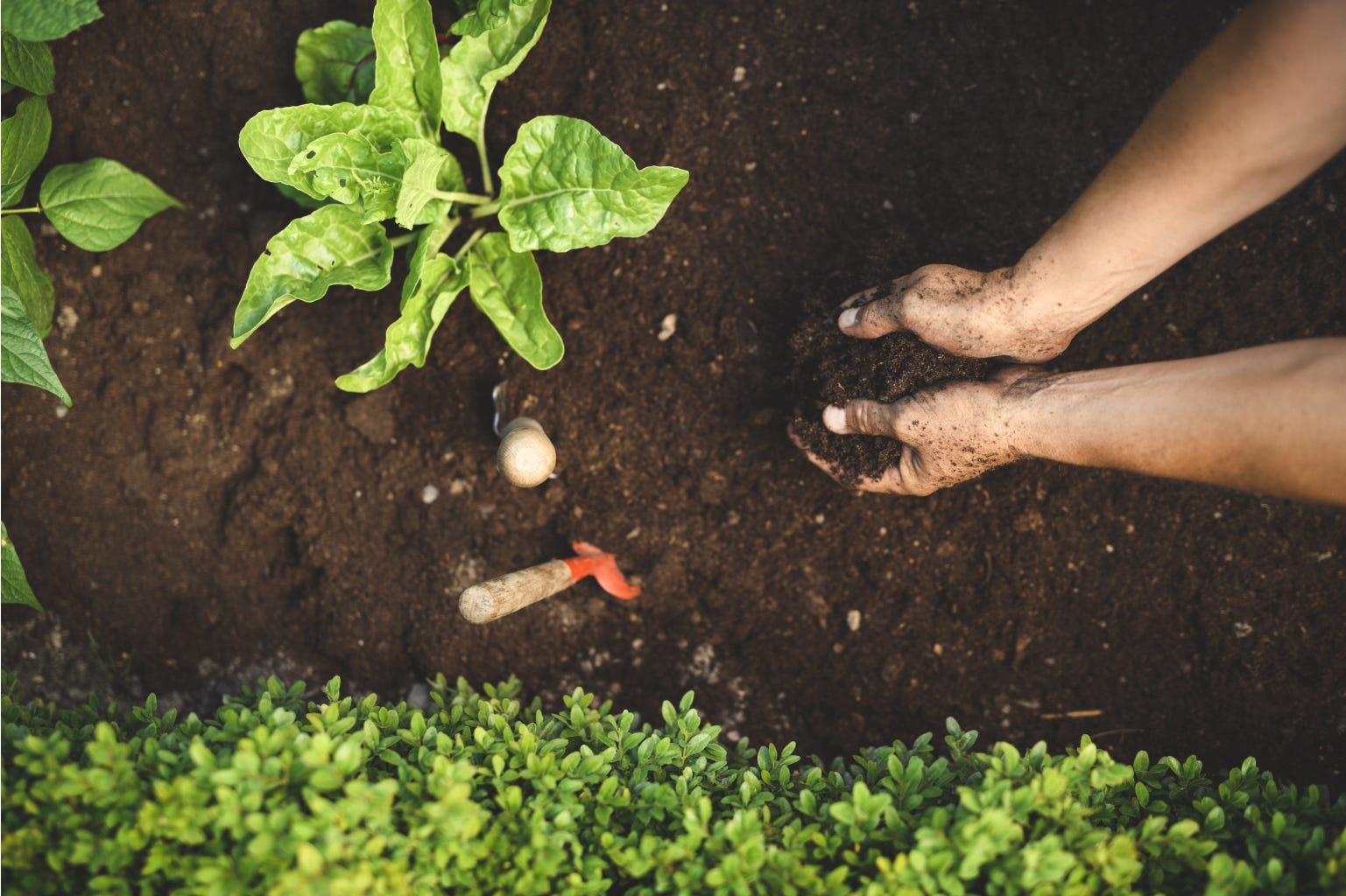 Handen planten aarde tuin