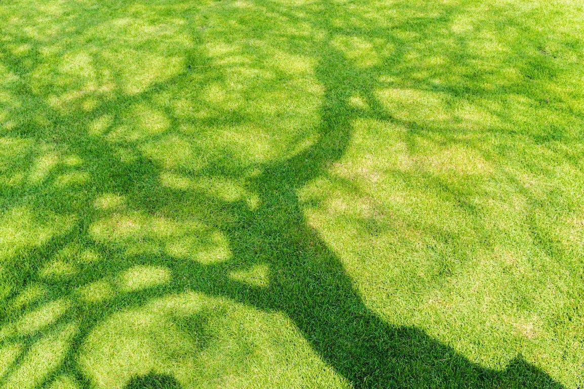 Faire pousser du gazon à l'ombre, c'est possible