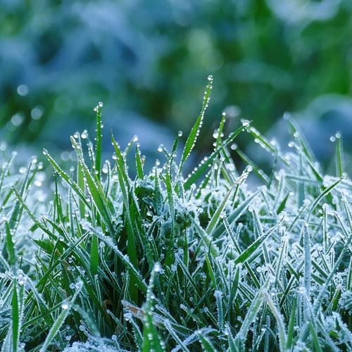 Jäätynyt vihreä ruoho