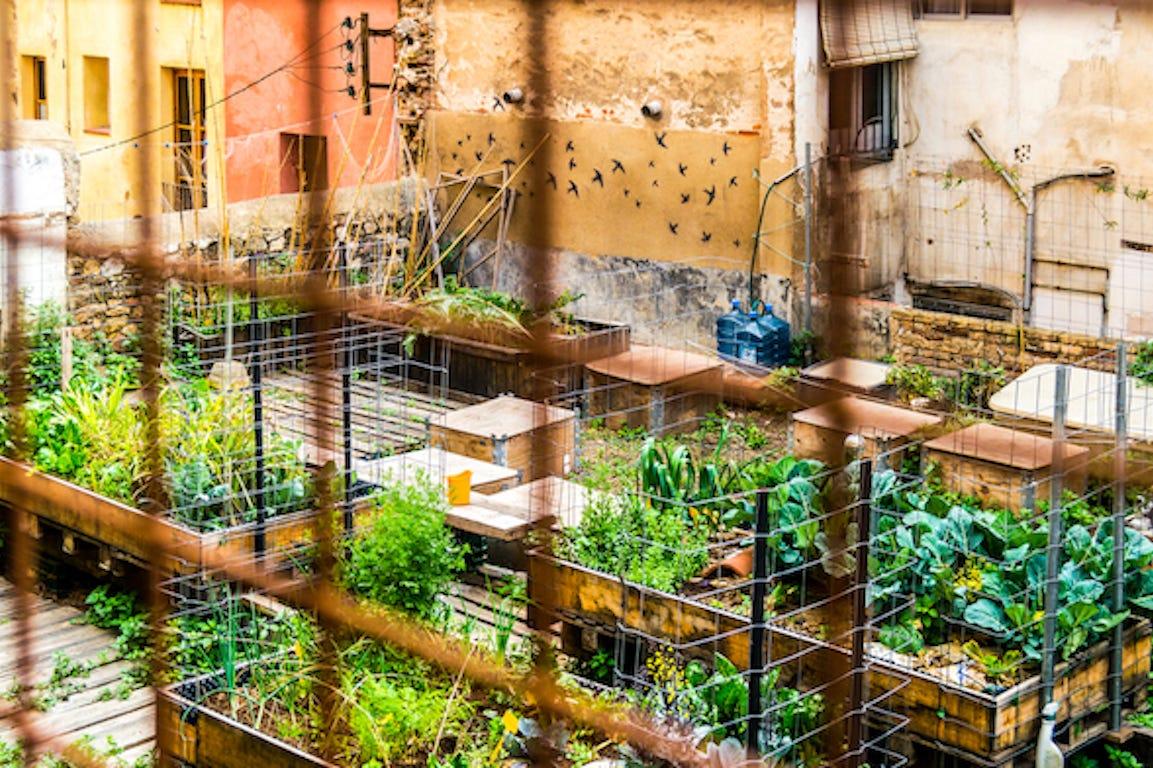jardin sur un toit d'immeuble