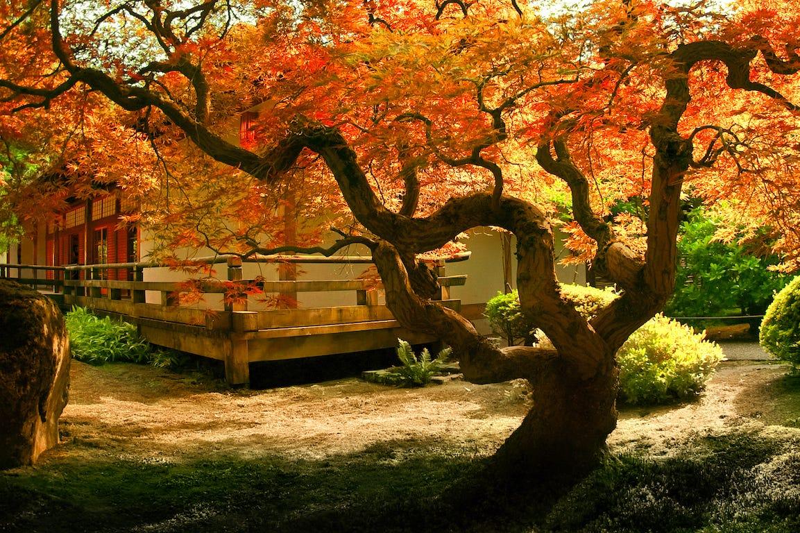 maison japonaise avec arbuste japonais de couleur orange