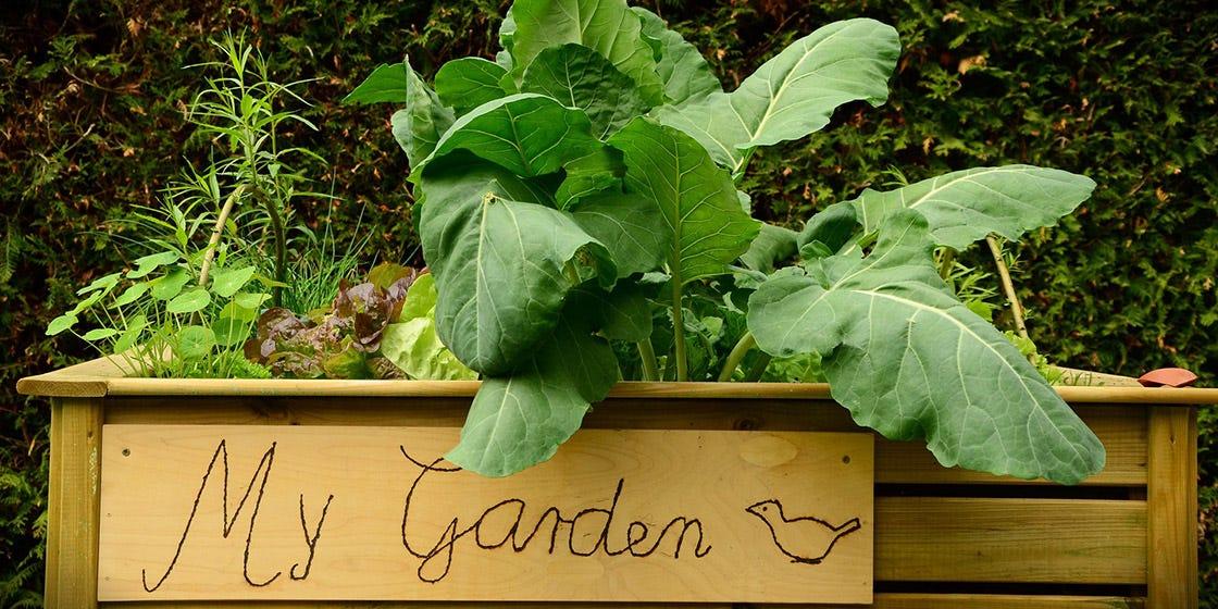 tuinkalender juni voor onderhouden moestuin en andere tuinklussen voor de maand juni
