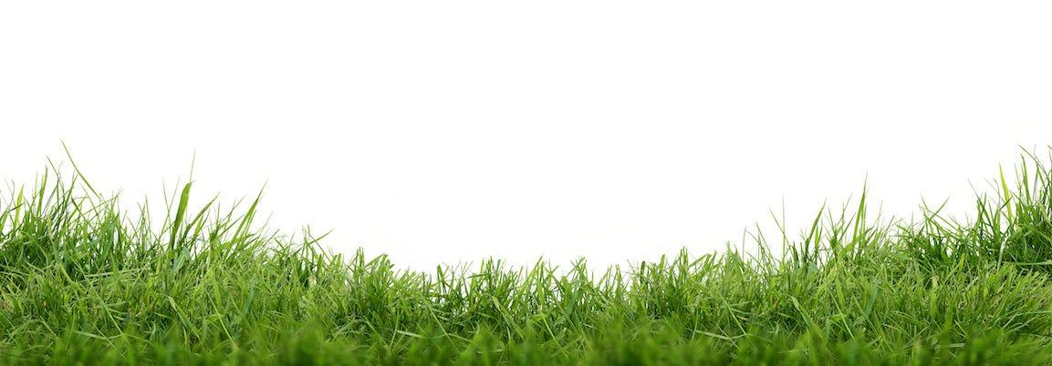 Le gazon au jardin