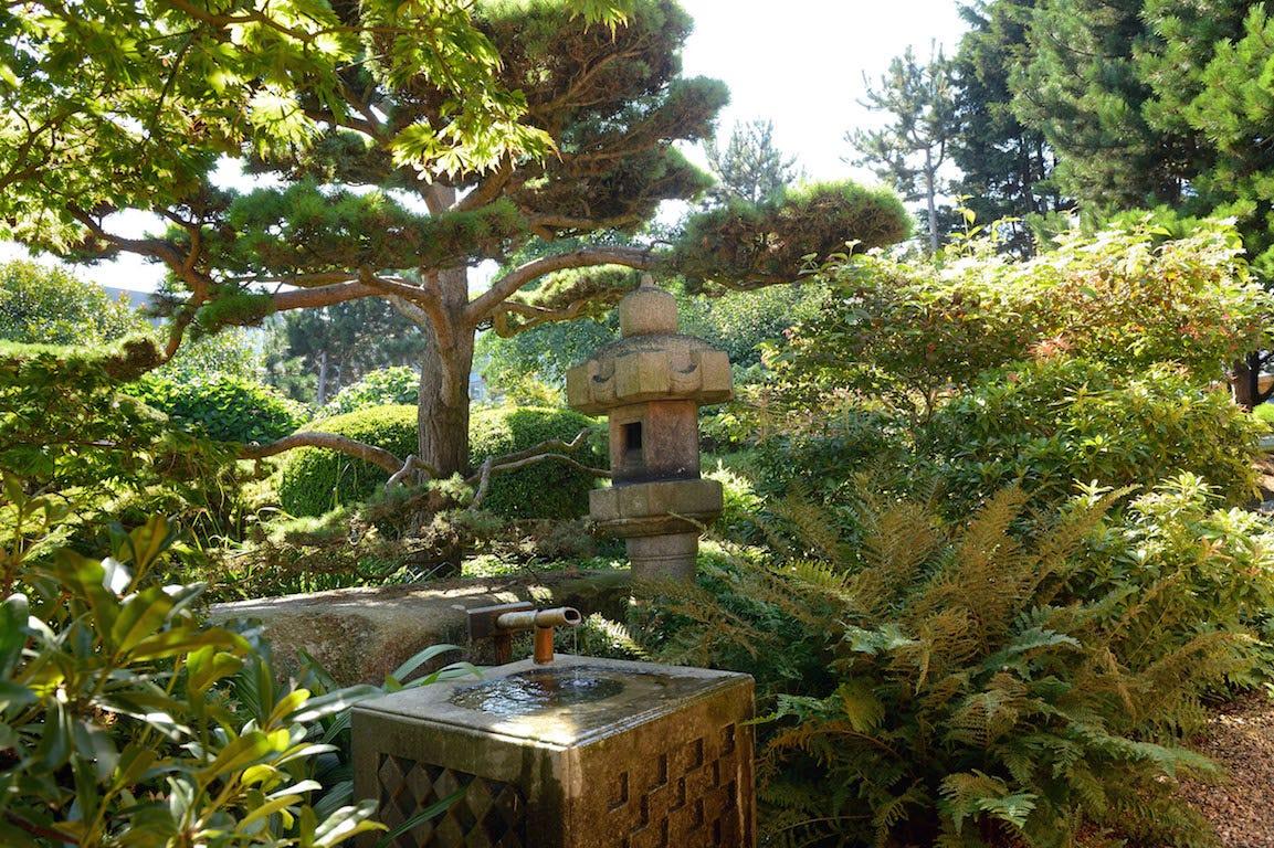 Le Havre jardin japonais arbuste et créations