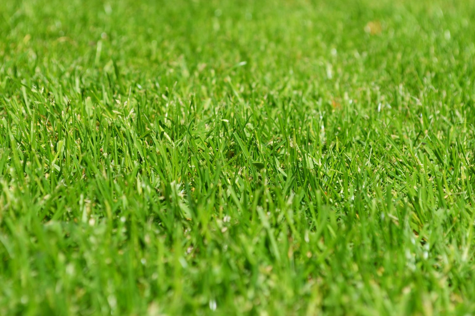 Green grass growing during Spring needs to be aerated before