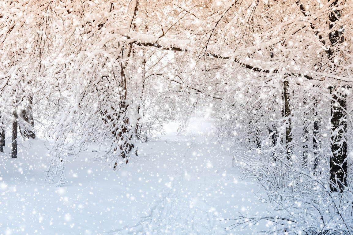 forêt couverte de neige avec flocons