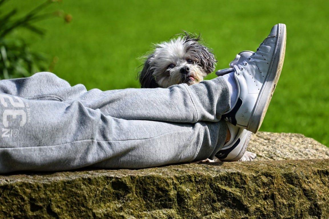 ontspannen voeten hond gazon gras tuin