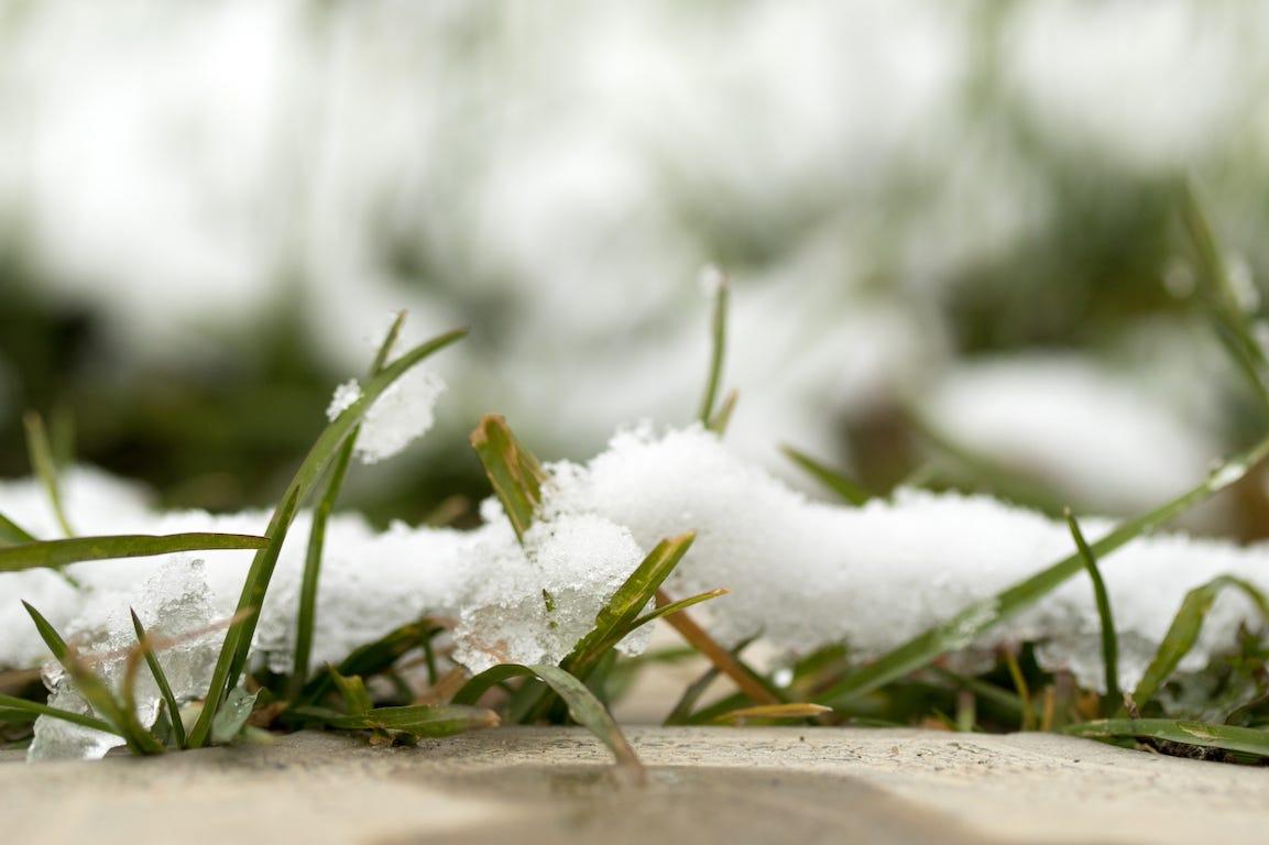 zoom sur pelouse avec neige