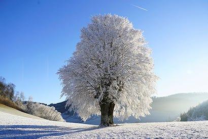 Få plænen sikkert gennem vinteren