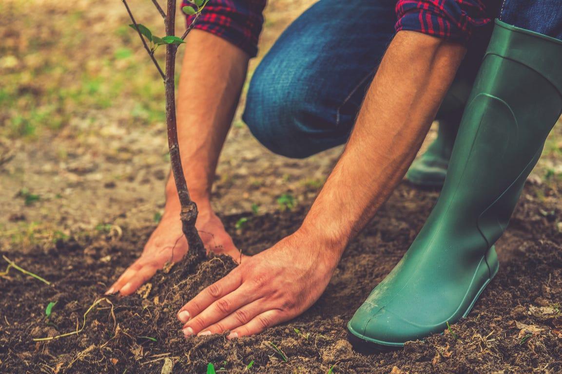Comment entretenir un grand jardin sans y passer trop de temps ?