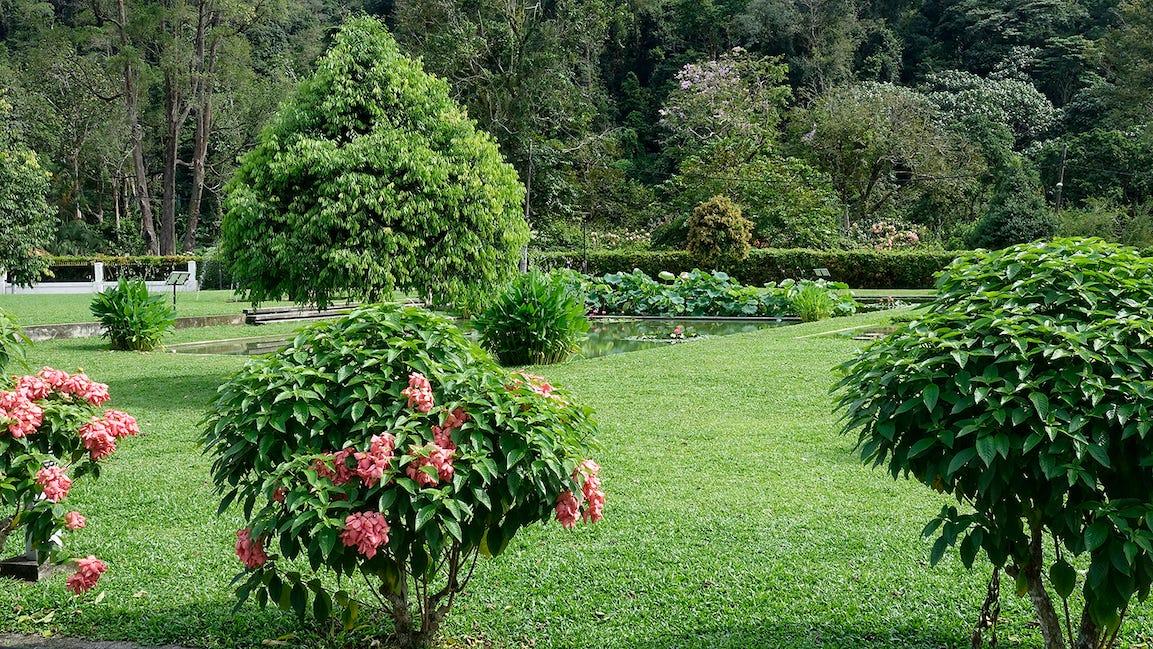 Plante couvre-sol alternative gazon