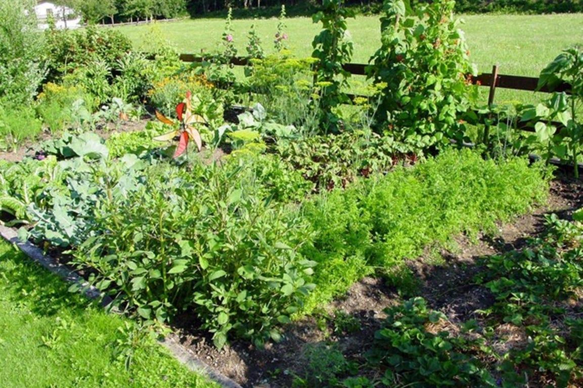 tuinieren in de lente moestuin in mei