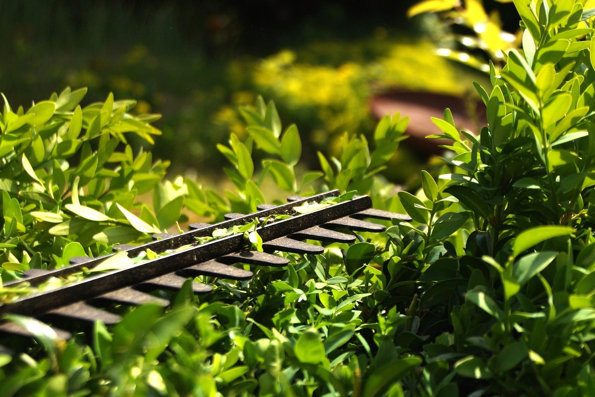 tuinieren struiken snoeien heg bijknippen haagschaar