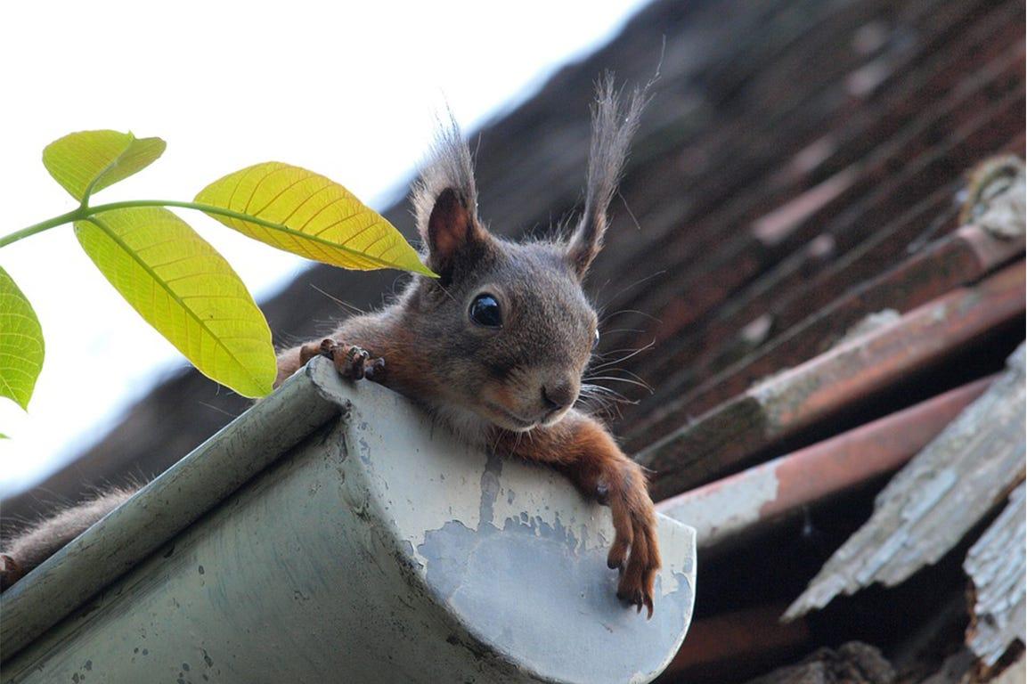 tuin lenteschoonmaak dakhook eekhoorn
