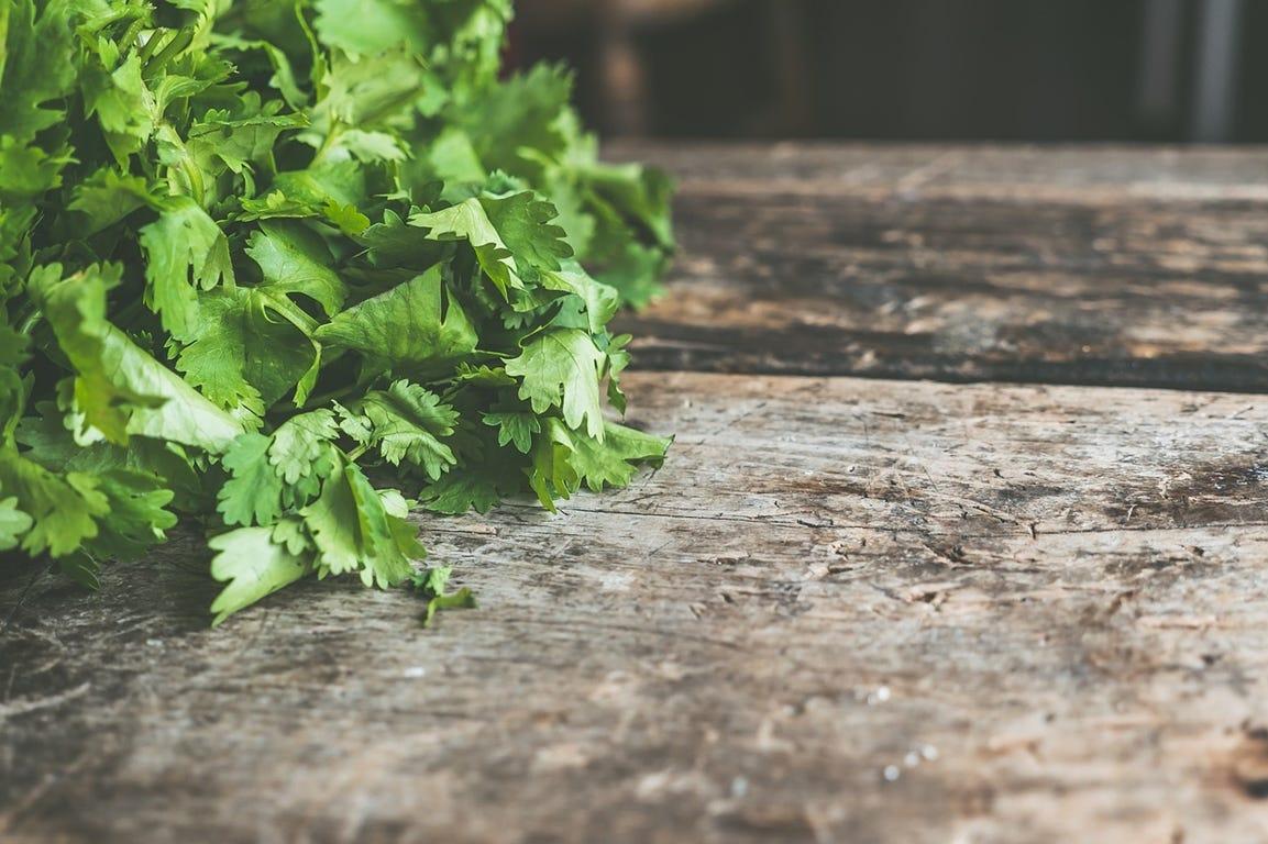 voordelen van zelf gekweekte kruiden koriander