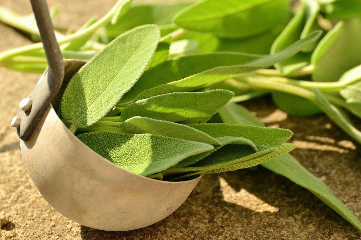 voordelen van zelf gekweekte kruiden salie