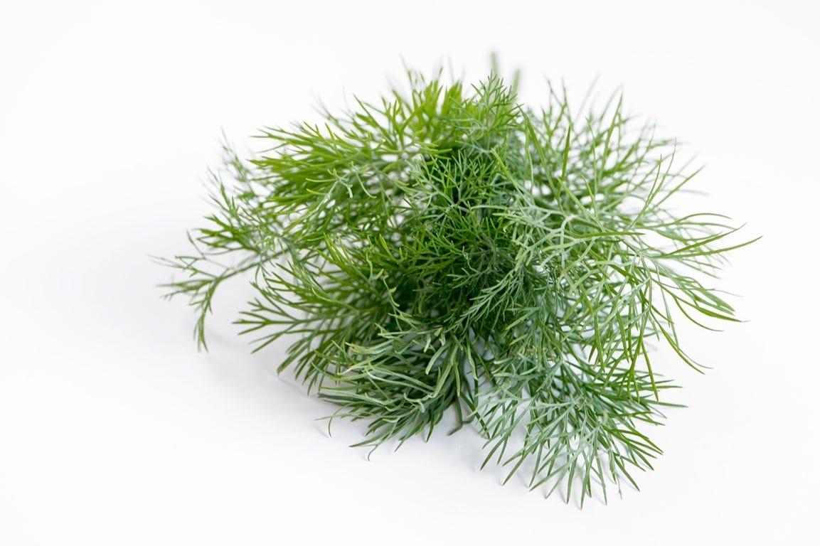 voordelen van zelf gekweekte kruiden dille