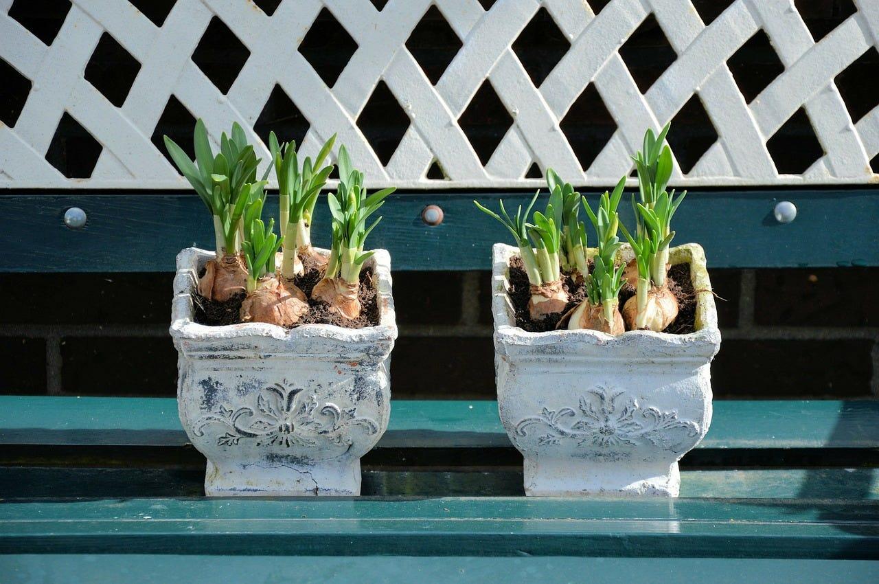 plantes en pot hiver
