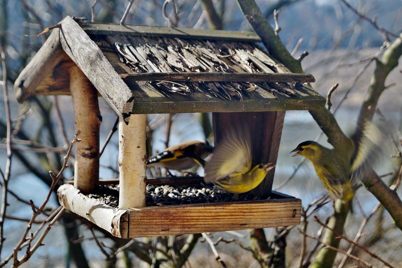 nichoir mangeoir oiseaux arbre dans jardin