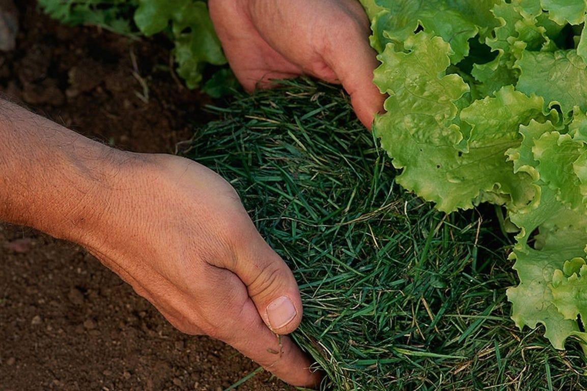 vakantie checklist tuin zomer moestuin mulch tegen droogte