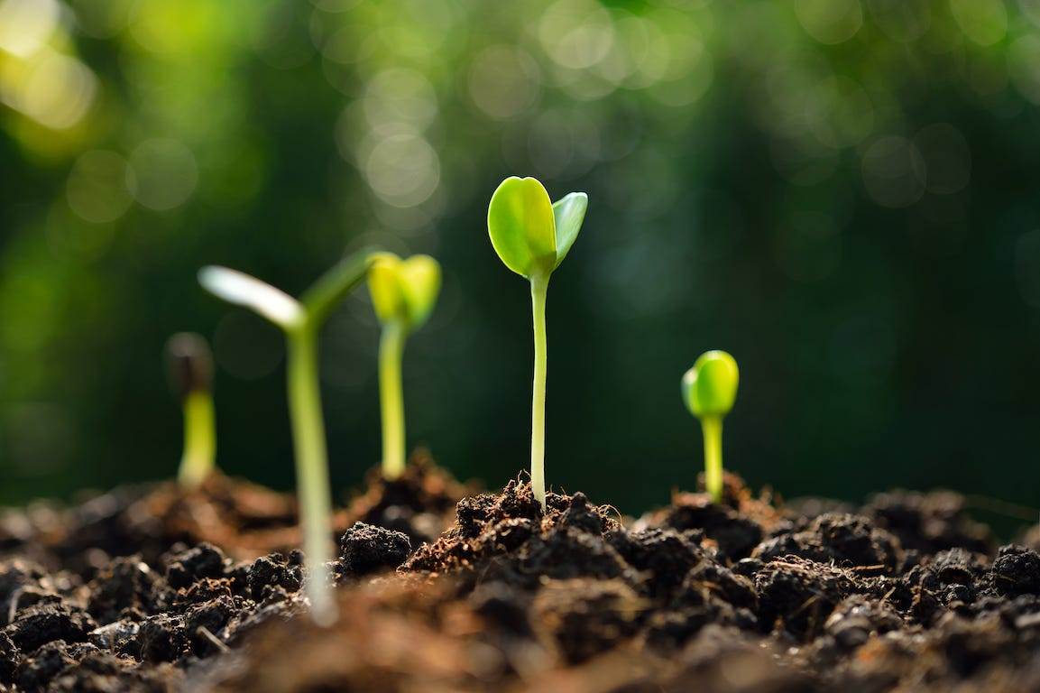 petite pousse de jardin sur terre