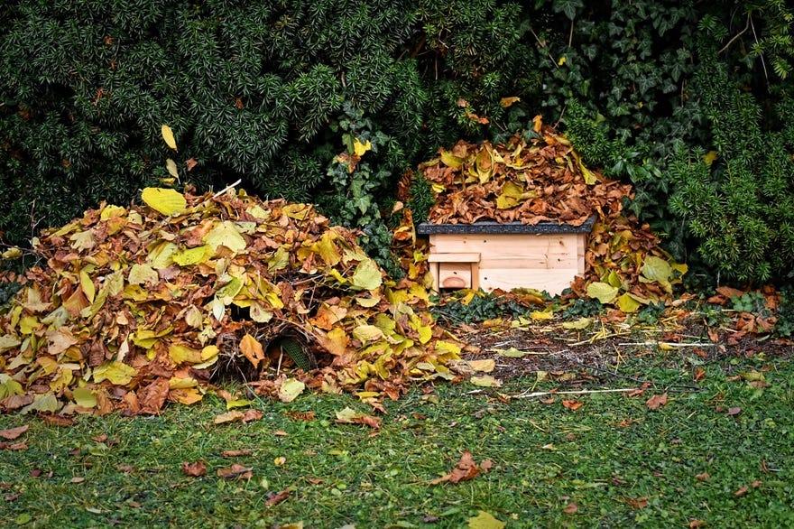 egel huisje met bladeren in de tuin