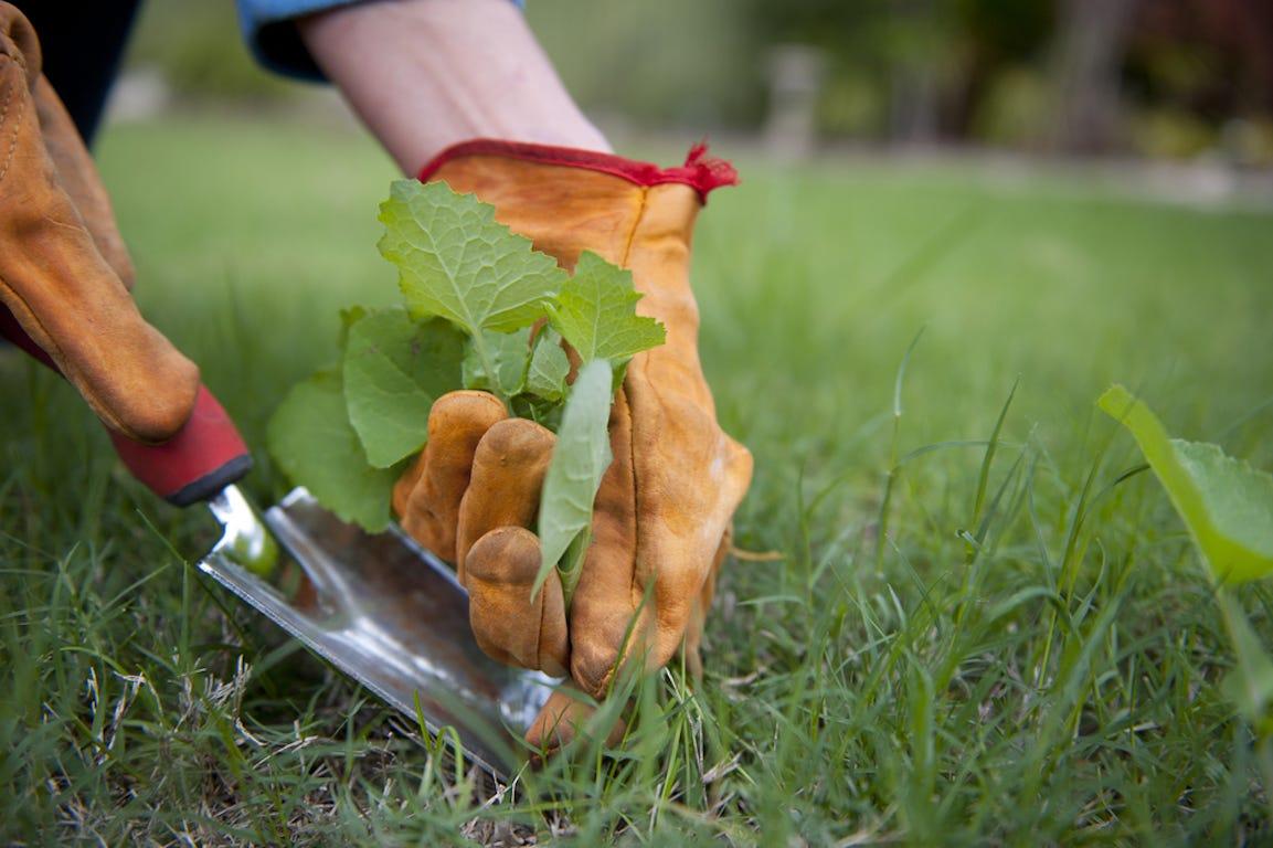 coupe de mauvaises herbes dans jardin