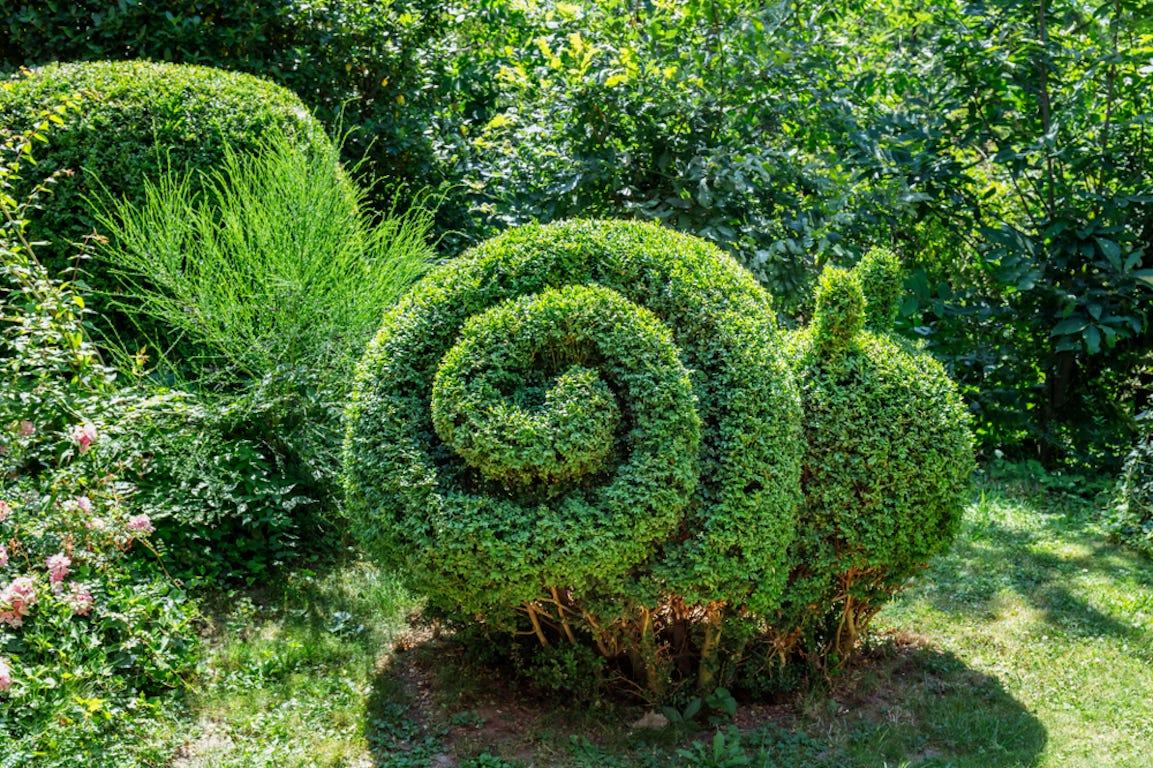 buisson taillé en forme d'escargot dans un jardin