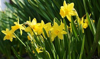 Foråret