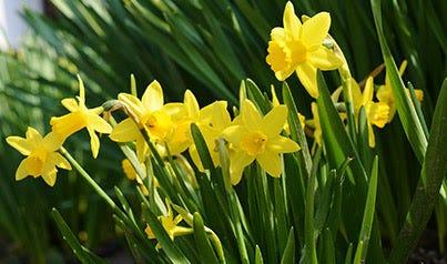 produits du printemps