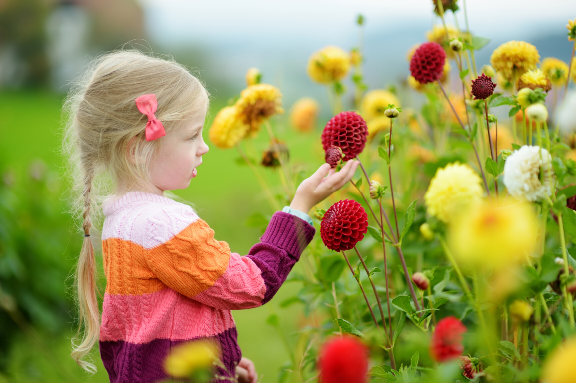 Tid til at plante planter